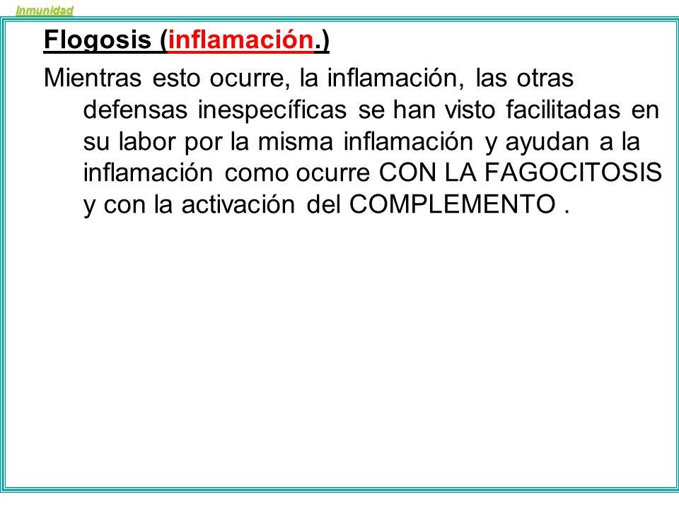 Inmunidad Flogosis (inflamación.) 1º Se produce el estímulo o noxa (daño, perjuicio) o toxina o incluso traumatismo. 2º Las células dañadas liberan SU