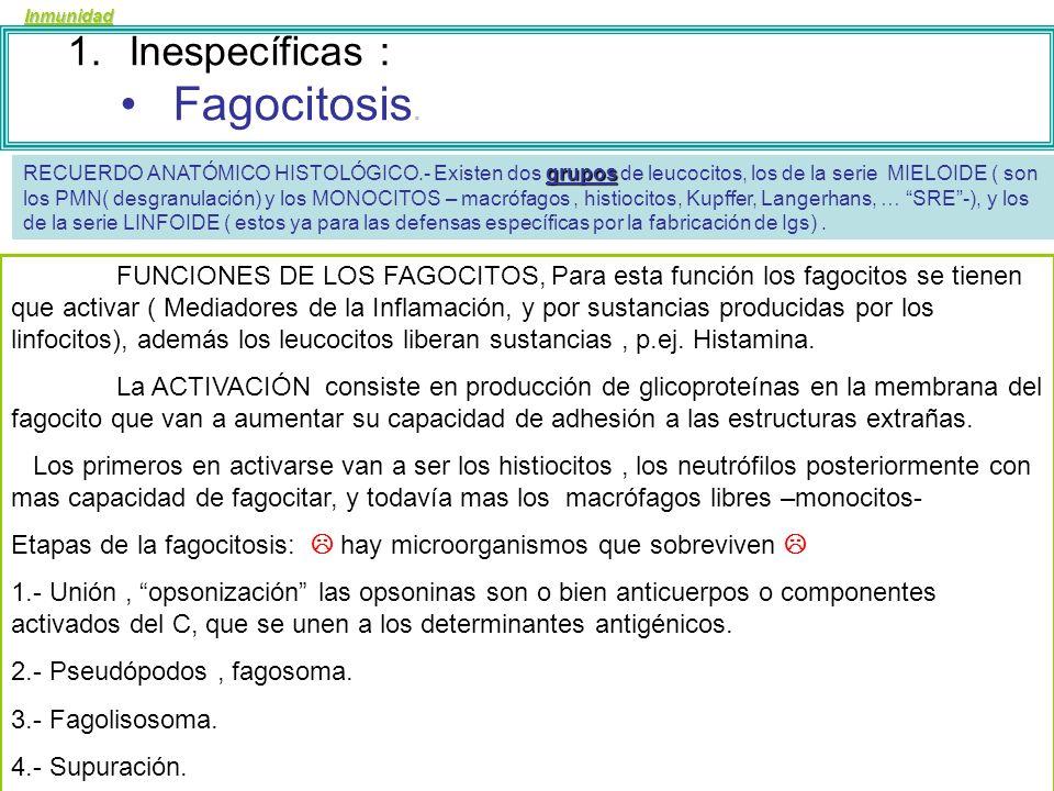 Inmunidad 1.Inespecíficas : Flogosis (inflamación.) Fagocitosis. Sistema del Complemento interferón