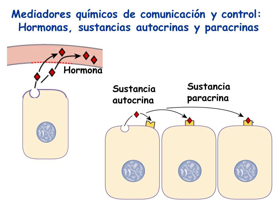 Mediadores químicos de comunicación y control: Hormonas, sustancias autocrinas y paracrinas Hormona Sustancia paracrina Sustancia autocrina