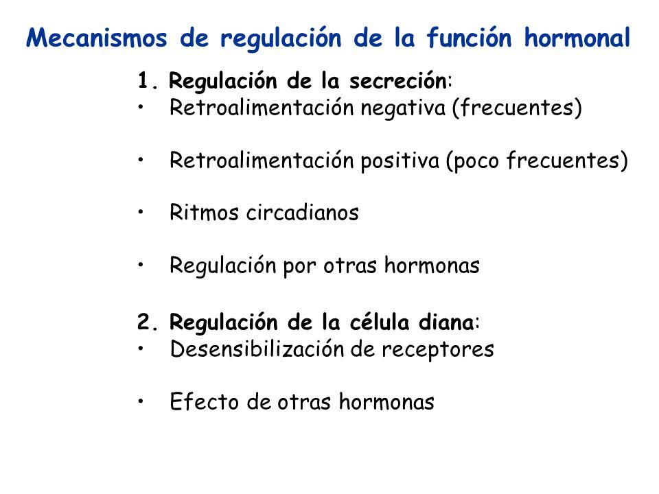 Mecanismos de regulación de la función hormonal 1. Regulación de la secreción: Retroalimentación negativa (frecuentes) Retroalimentación positiva (poc