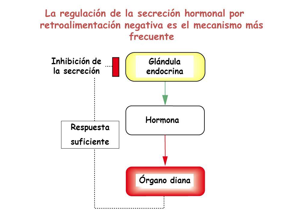 Glándula endocrina Hormona Órgano diana Respuesta suficiente Inhibición de la secreción La regulación de la secreción hormonal por retroalimentación n