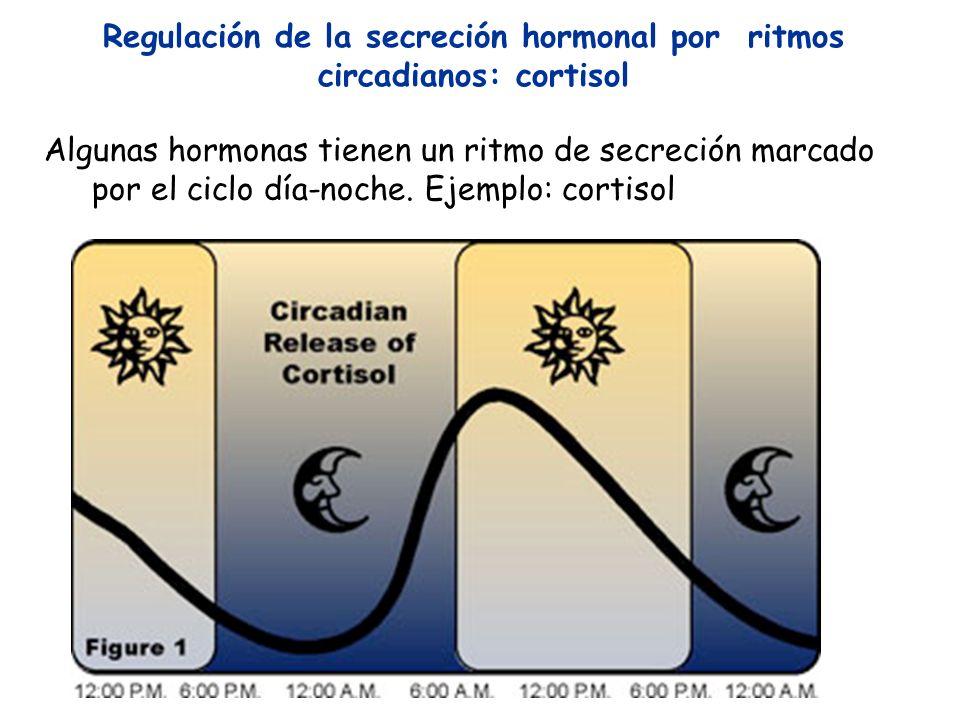 Algunas hormonas tienen un ritmo de secreción marcado por el ciclo día-noche. Ejemplo: cortisol Regulación de la secreción hormonal por ritmos circadi