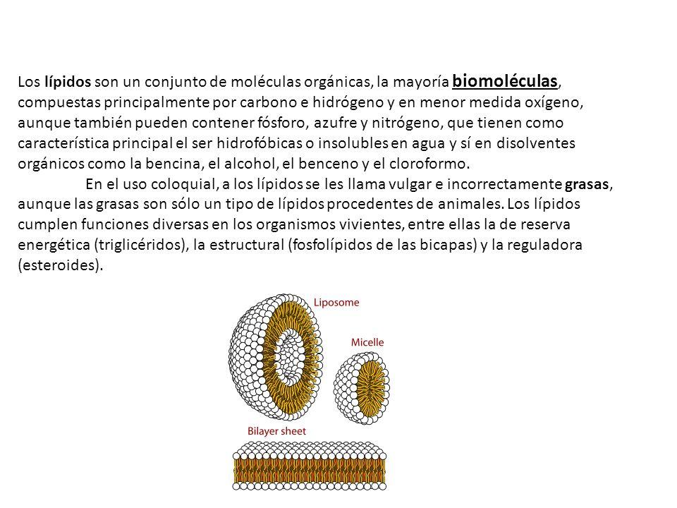 Los lípidos son un conjunto de moléculas orgánicas, la mayoría biomoléculas, compuestas principalmente por carbono e hidrógeno y en menor medida oxíge