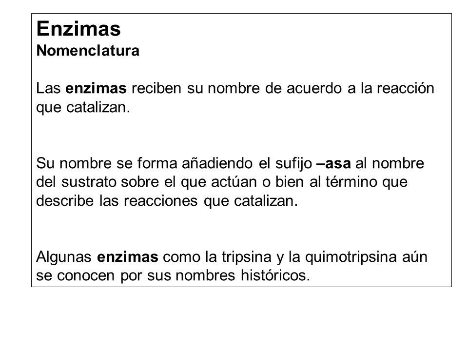 Enzimas Nomenclatura Las enzimas reciben su nombre de acuerdo a la reacción que catalizan. Su nombre se forma añadiendo el sufijo –asa al nombre del s
