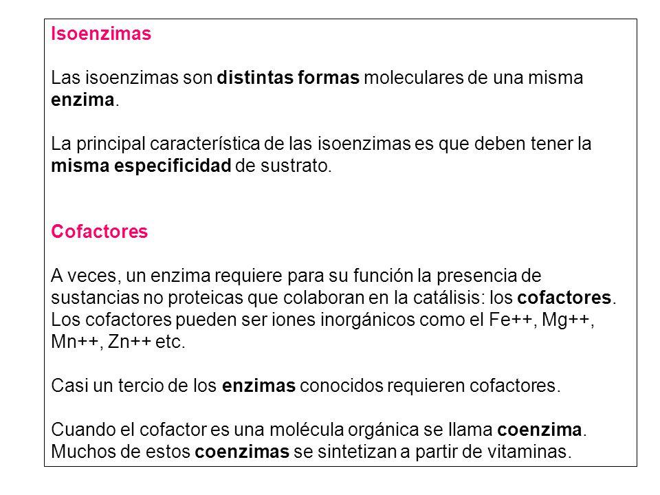 Isoenzimas Las isoenzimas son distintas formas moleculares de una misma enzima. La principal característica de las isoenzimas es que deben tener la mi