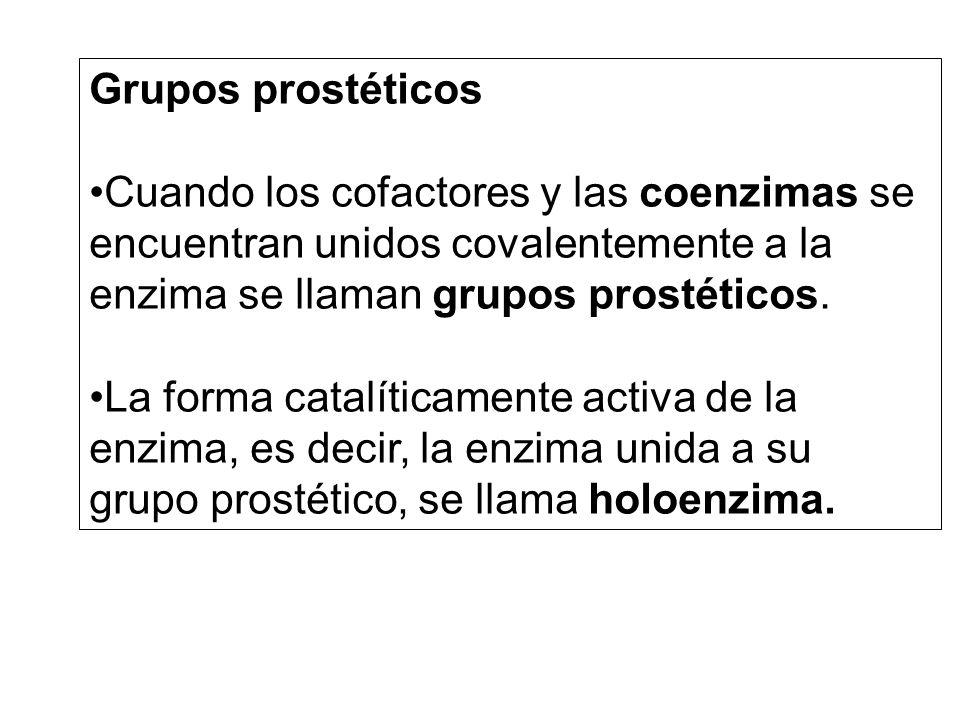 Grupos prostéticos Cuando los cofactores y las coenzimas se encuentran unidos covalentemente a la enzima se llaman grupos prostéticos. La forma catalí