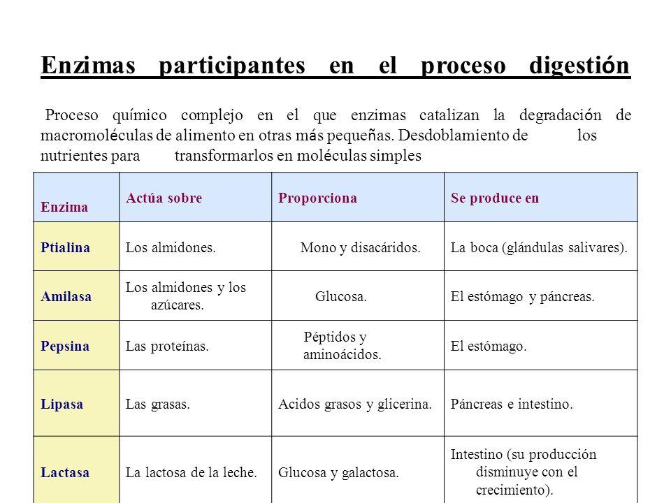 Enzimas participantes en el proceso digesti ó n Proceso qu í mico complejo en el que enzimas catalizan la degradaci ó n de macromol é culas de aliment