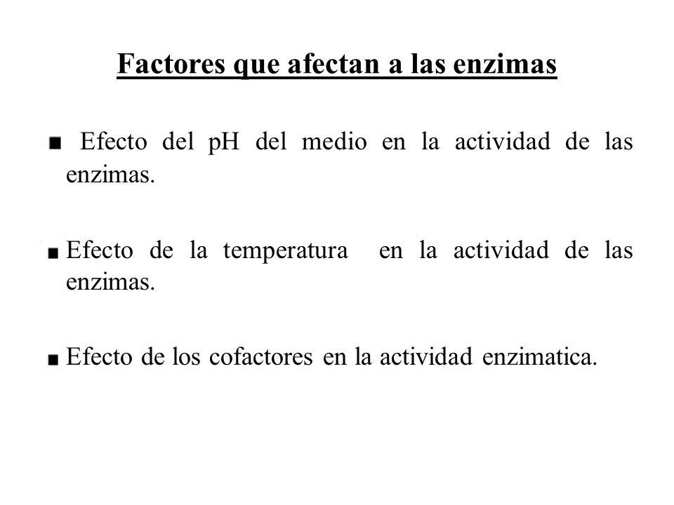 Factores que afectan a las enzimas Efecto del pH del medio en la actividad de las enzimas. Efecto de la temperatura en la actividad de las enzimas. Ef