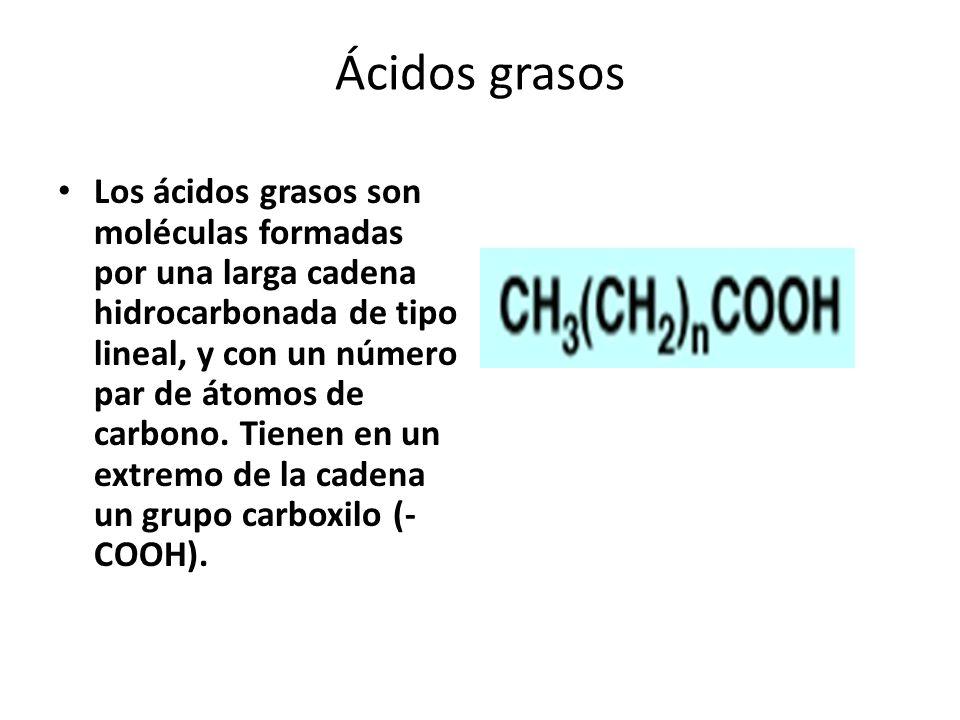 Ácidos grasos Los ácidos grasos son moléculas formadas por una larga cadena hidrocarbonada de tipo lineal, y con un número par de átomos de carbono. T