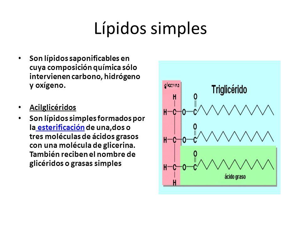 Lípidos simples Son lípidos saponificables en cuya composición química sólo intervienen carbono, hidrógeno y oxígeno. Acilglicéridos Son lípidos simpl