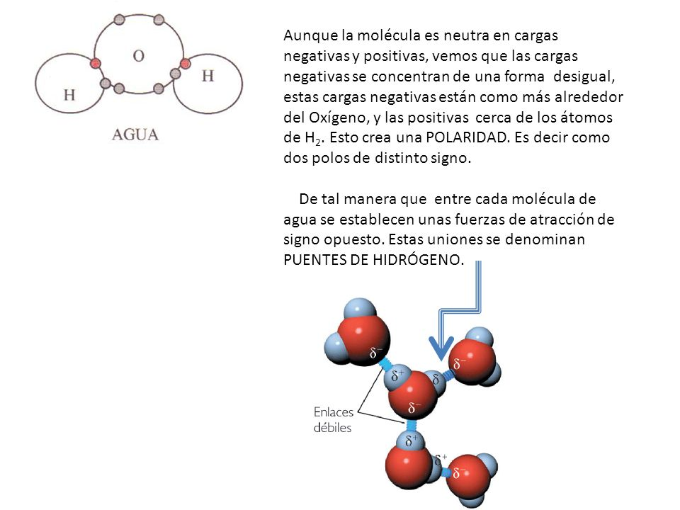 Aunque la molécula es neutra en cargas negativas y positivas, vemos que las cargas negativas se concentran de una forma desigual, estas cargas negativ