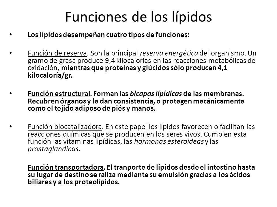Funciones de los lípidos Los lípidos desempeñan cuatro tipos de funciones: Función de reserva. Son la principal reserva energética del organismo. Un g