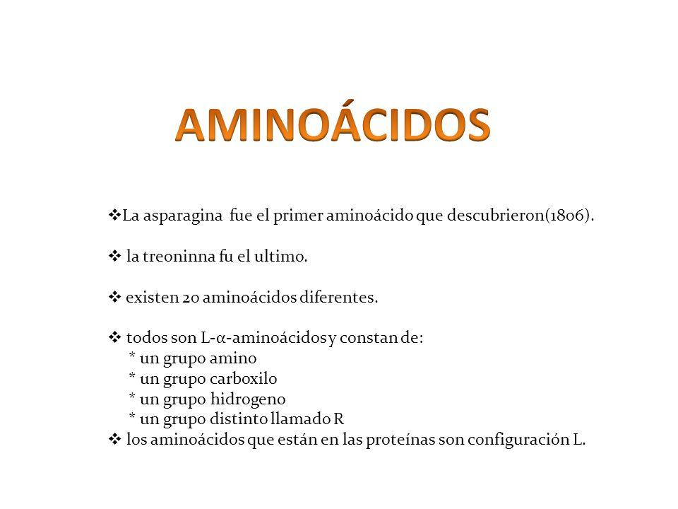 La asparagina fue el primer aminoácido que descubrieron(1806). la treoninna fu el ultimo. existen 20 aminoácidos diferentes. todos son L-α-aminoácidos