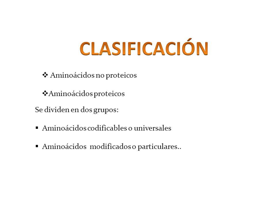 Aminoácidos no proteicos Aminoácidos proteicos Se dividen en dos grupos: Aminoácidos codificables o universales Aminoácidos modificados o particulares