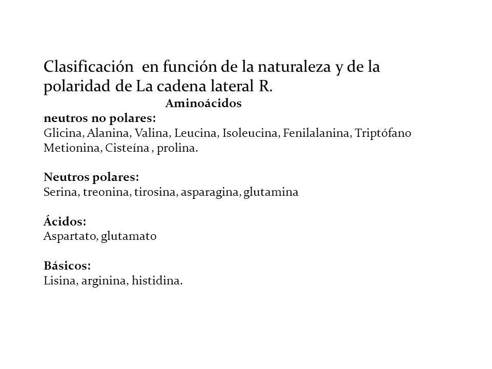 Clasificación en función de la naturaleza y de la polaridad de La cadena lateral R. Aminoácidos neutros no polares: Glicina, Alanina, Valina, Leucina,
