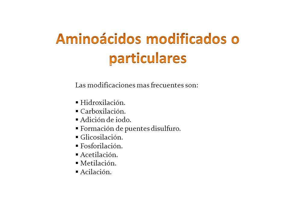 Las modificaciones mas frecuentes son: Hidroxilación. Carboxilación. Adición de iodo. Formación de puentes disulfuro. Glicosilación. Fosforilación. Ac