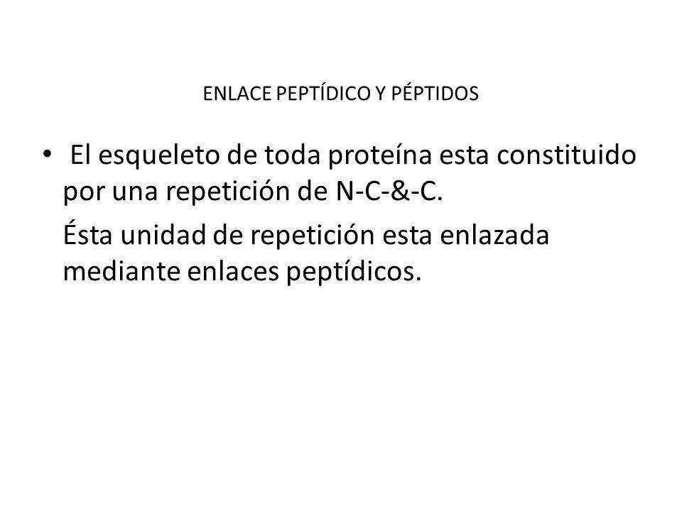 ENLACE PEPTÍDICO Y PÉPTIDOS El esqueleto de toda proteína esta constituido por una repetición de N-C-&-C. Ésta unidad de repetición esta enlazada medi