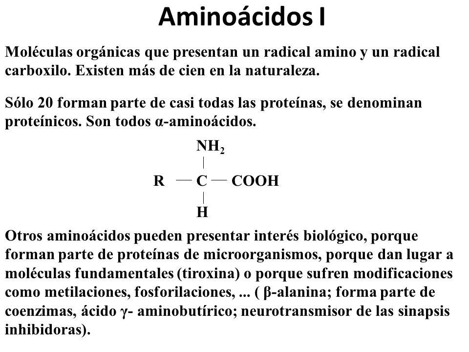 Aminoácidos I Moléculas orgánicas que presentan un radical amino y un radical carboxilo. Existen más de cien en la naturaleza. Sólo 20 forman parte de