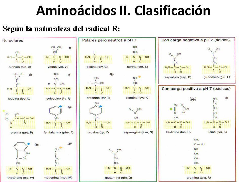Aminoácidos II. Clasificación