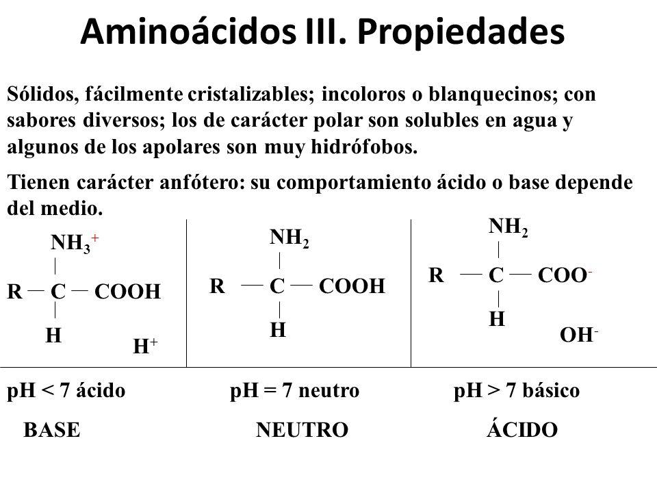 Aminoácidos III. Propiedades Sólidos, fácilmente cristalizables; incoloros o blanquecinos; con sabores diversos; los de carácter polar son solubles en