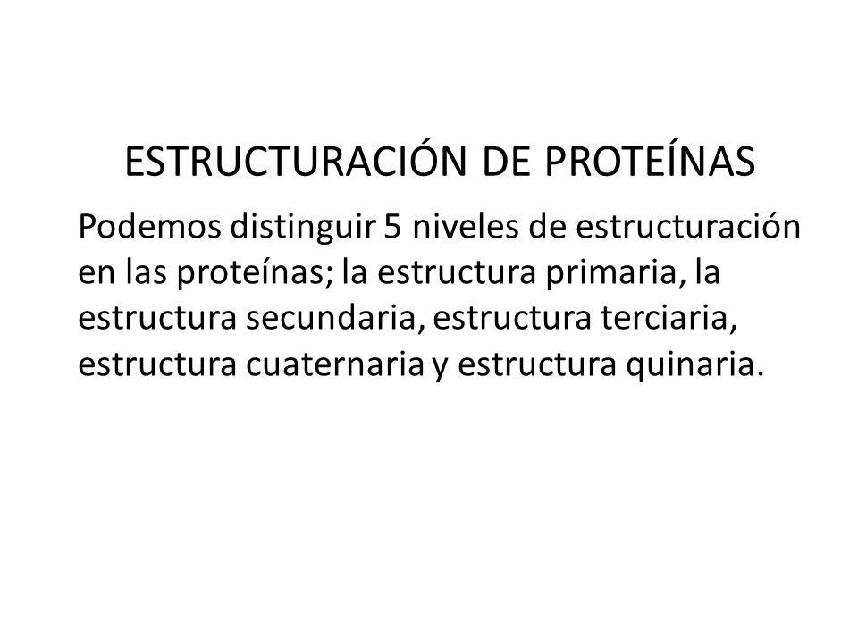 ESTRUCTURACIÓN DE PROTEÍNAS Podemos distinguir 5 niveles de estructuración en las proteínas; la estructura primaria, la estructura secundaria, estruct