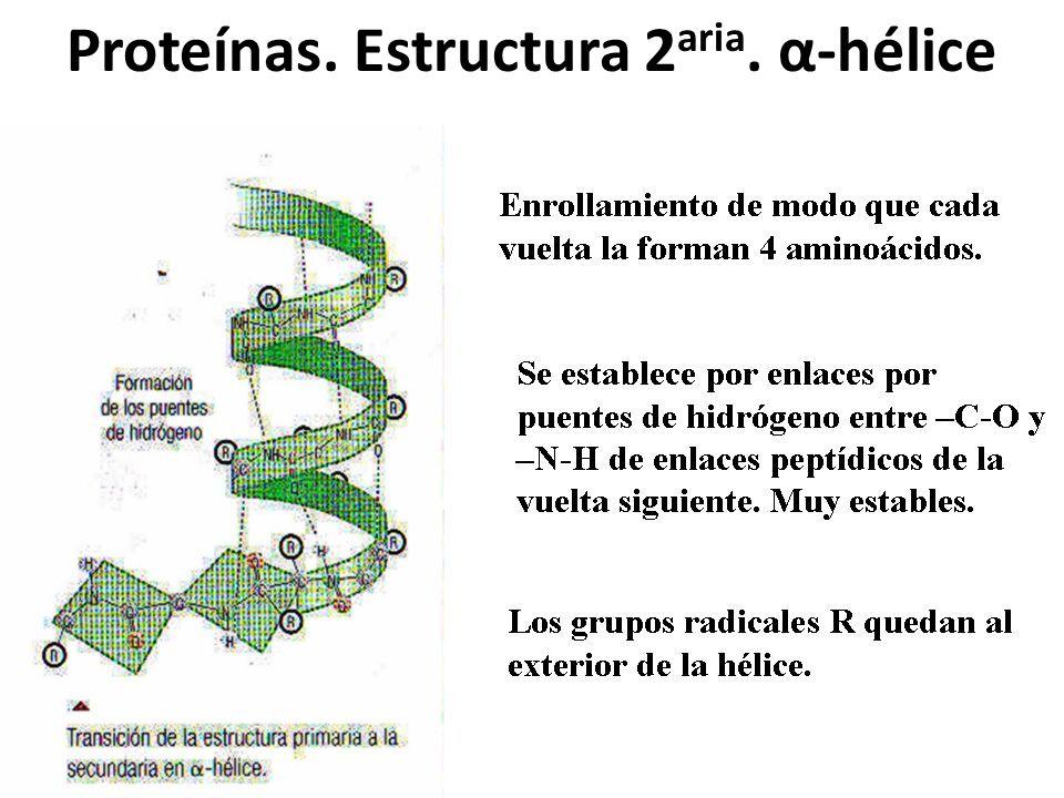 Proteínas. Estructura 2 aria. α-hélice