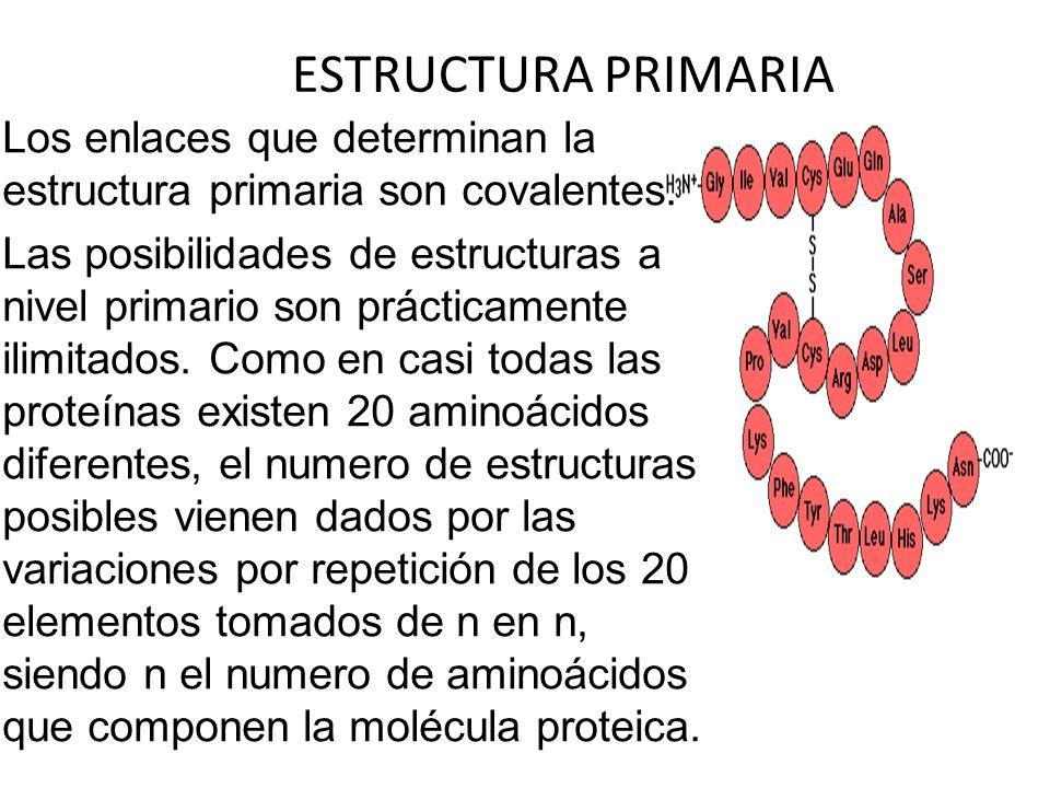 ESTRUCTURA PRIMARIA Los enlaces que determinan la estructura primaria son covalentes. Las posibilidades de estructuras a nivel primario son prácticame