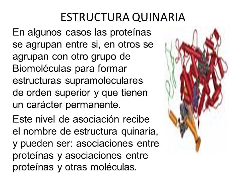 ESTRUCTURA QUINARIA En algunos casos las proteínas se agrupan entre si, en otros se agrupan con otro grupo de Biomoléculas para formar estructuras sup
