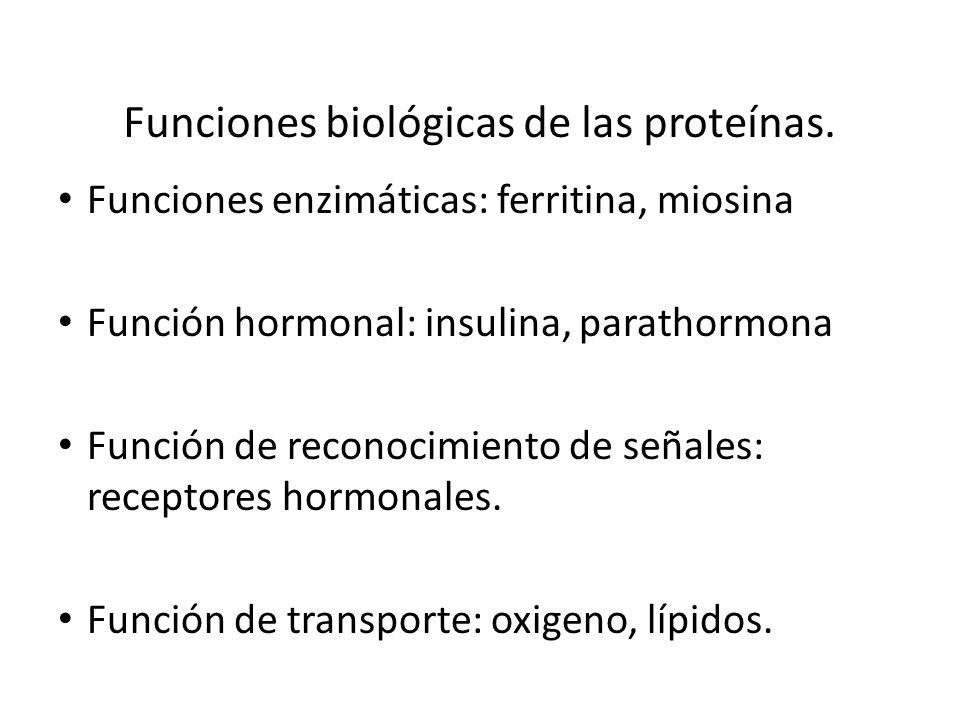 Funciones biológicas de las proteínas. Funciones enzimáticas: ferritina, miosina Función hormonal: insulina, parathormona Función de reconocimiento de