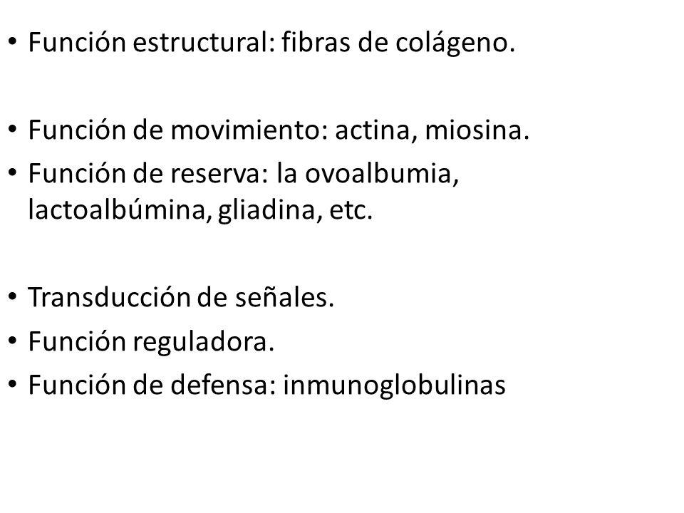 Función estructural: fibras de colágeno. Función de movimiento: actina, miosina. Función de reserva: la ovoalbumia, lactoalbúmina, gliadina, etc. Tran
