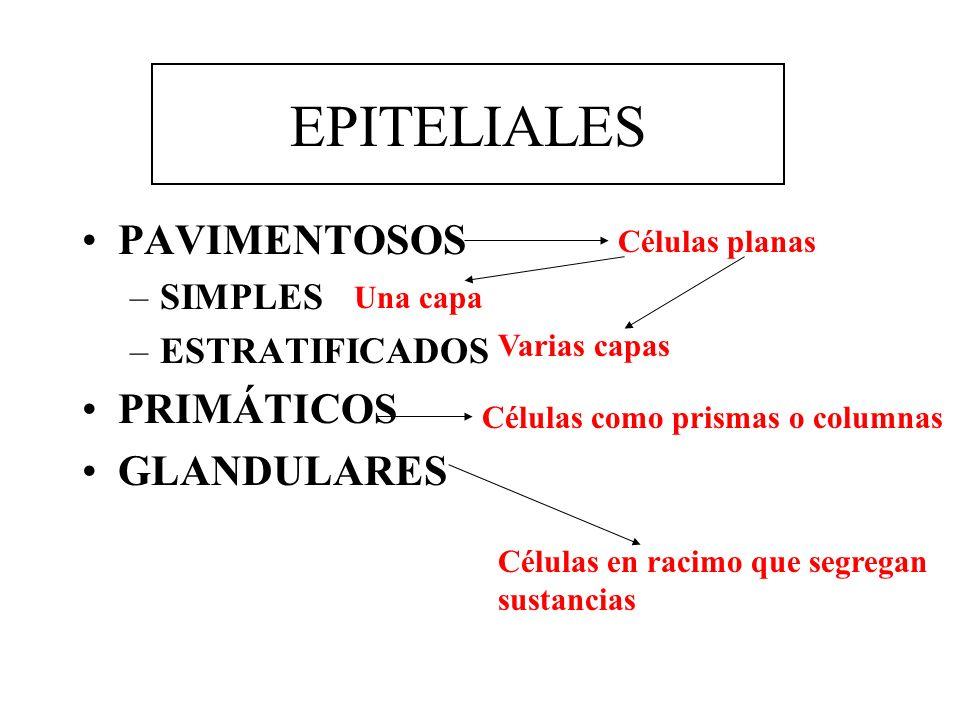 EPITELIALES PAVIMENTOSOS –SIMPLES –ESTRATIFICADOS PRIMÁTICOS GLANDULARES Células planas Una capa Varias capas Células como prismas o columnas Células