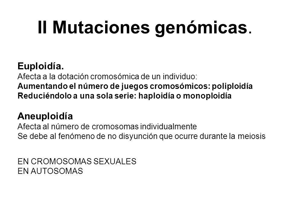 II Mutaciones genómicas. Euploidía. Afecta a la dotación cromosómica de un individuo: Aumentando el número de juegos cromosómicos: poliploidía Reducié