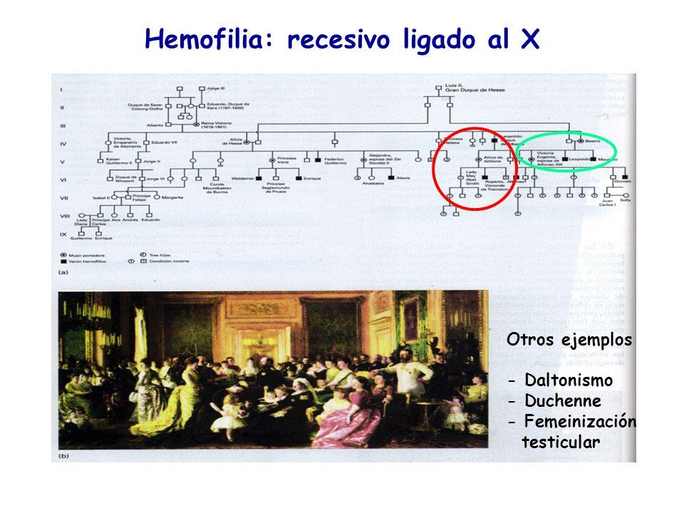 Hemofilia: recesivo ligado al X Otros ejemplos - Daltonismo - Duchenne - Femeinización testicular