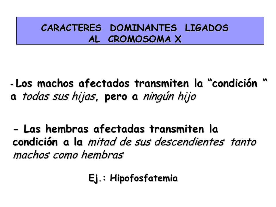 CARACTERES DOMINANTES LIGADOS AL CROMOSOMA X - Los machos afectados transmiten la condición a todas sus hijas, pero a ningún hijo - Las hembras afecta