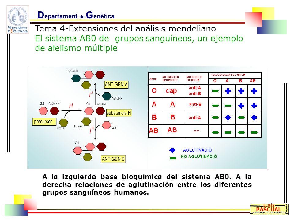 D epartament de G enètica Tema 4-Extensiones del análisis mendeliano El sistema AB0 de grupos sanguíneos, un ejemplo de alelismo múltiple LLUÍS PASCUA