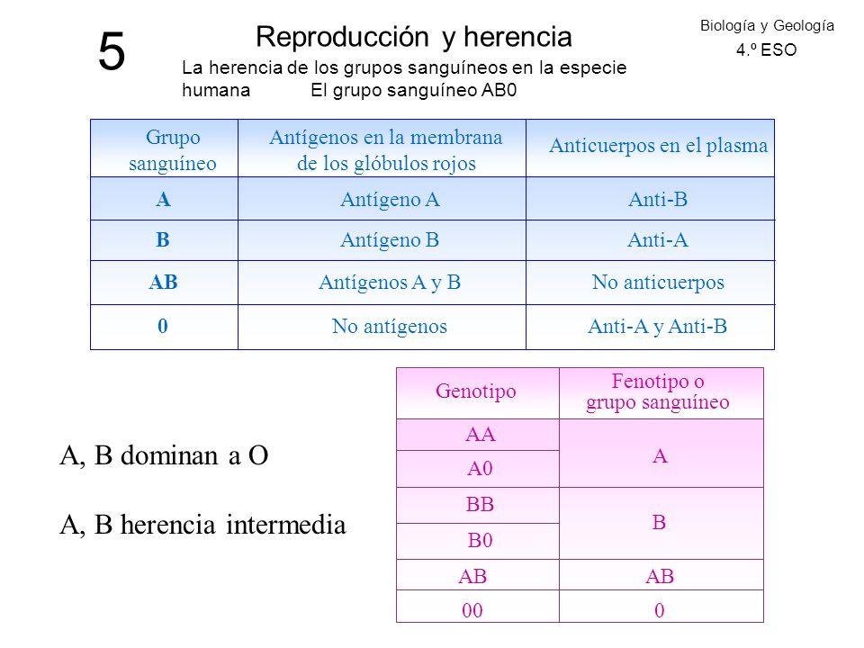 5 Reproducción y herencia Biología y Geología 4.º ESO La herencia de los grupos sanguíneos en la especie humana El grupo sanguíneo AB0 Grupo sanguíneo