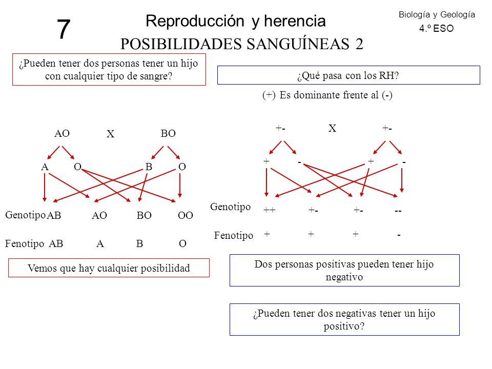 7 Reproducción y herencia Biología y Geología 4.º ESO POSIBILIDADES SANGUÍNEAS 2 ¿Pueden tener dos personas tener un hijo con cualquier tipo de sangre