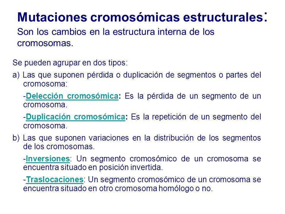Mutaciones cromosómicas estructurales : Son los cambios en la estructura interna de los cromosomas. Se pueden agrupar en dos tipos: a) Las que suponen