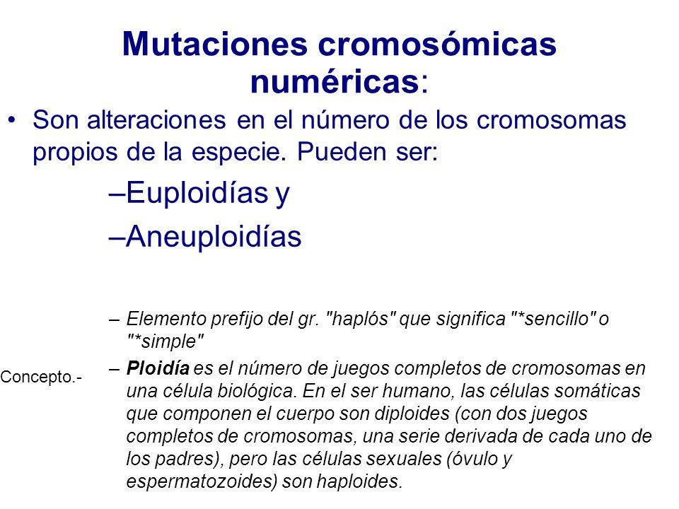 Mutaciones cromosómicas numéricas: Son alteraciones en el número de los cromosomas propios de la especie. Pueden ser: –Euploidías y –Aneuploidías –Ele