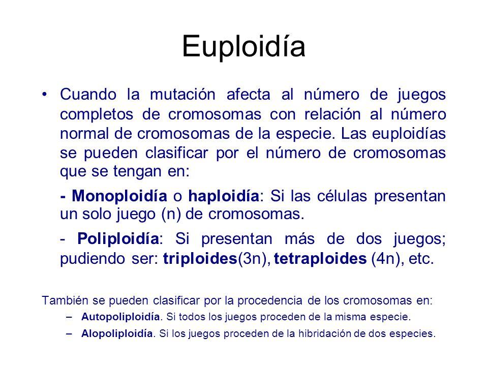 Euploidía Cuando la mutación afecta al número de juegos completos de cromosomas con relación al número normal de cromosomas de la especie. Las euploid