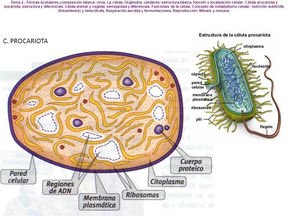 C. PROCARIOTA Tema 2.- Formas acelulares, composición básica: virus. La célula. Orgánulos celulares: estructura básica, función y localización celular