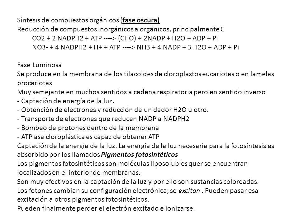 Síntesis de compuestos orgánicos (fase oscura) Reducción de compuestos inorgánicos a orgánicos, principalmente C CO2 + 2 NADPH2 + ATP ----> (CHO) + 2N
