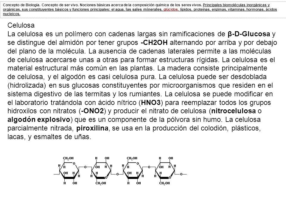 Celulosa La celulosa es un polímero con cadenas largas sin ramificaciones de β-D-Glucosa y se distingue del almidón por tener grupos -CH2OH alternando por arriba y por debajo del plano de la molécula.