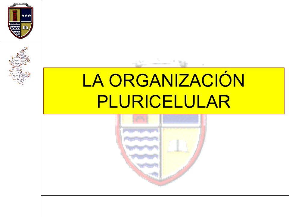 02/02/2014David Alberto Pacheco Montoya2 Qué sabes acerca de… 1.¿Qué es un organismo pluricelular.