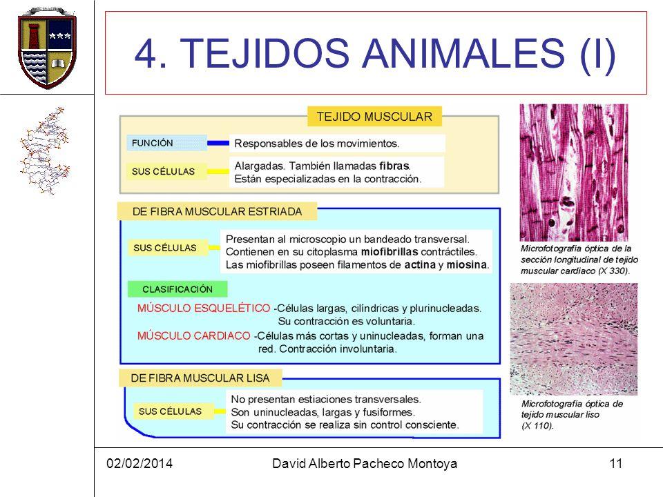 02/02/2014David Alberto Pacheco Montoya11 4. TEJIDOS ANIMALES (I)