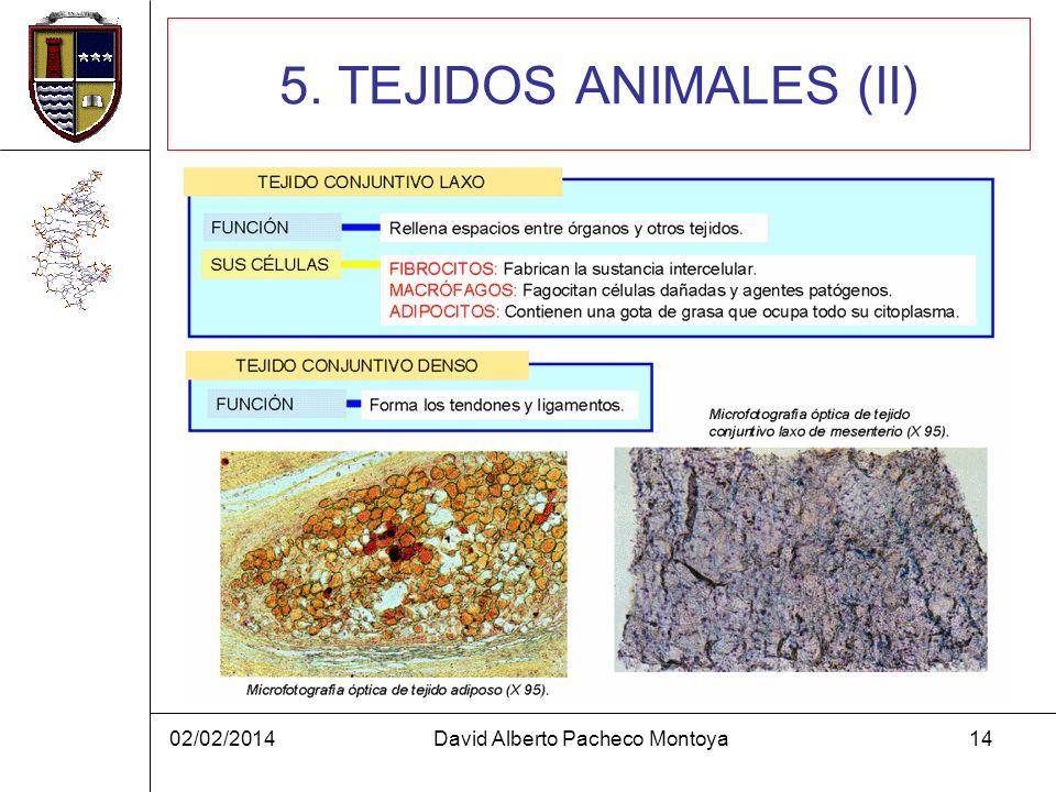 02/02/2014David Alberto Pacheco Montoya14 5. TEJIDOS ANIMALES (II)