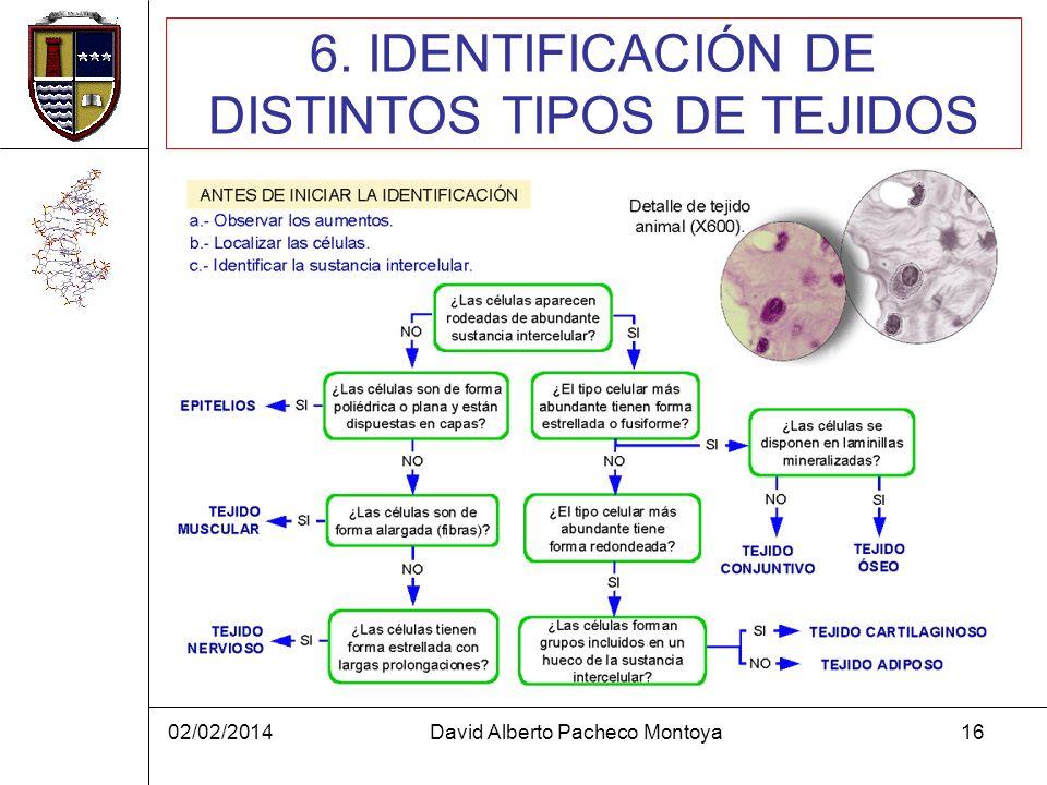 02/02/2014David Alberto Pacheco Montoya16 6. IDENTIFICACIÓN DE DISTINTOS TIPOS DE TEJIDOS