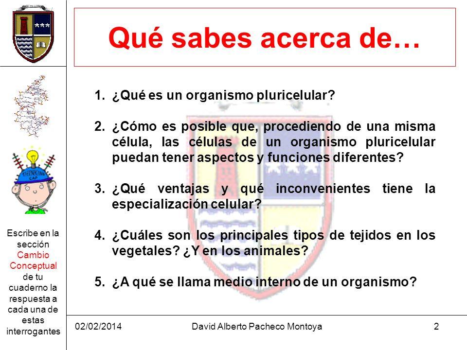 02/02/2014David Alberto Pacheco Montoya2 Qué sabes acerca de… 1.¿Qué es un organismo pluricelular? 2.¿Cómo es posible que, procediendo de una misma cé