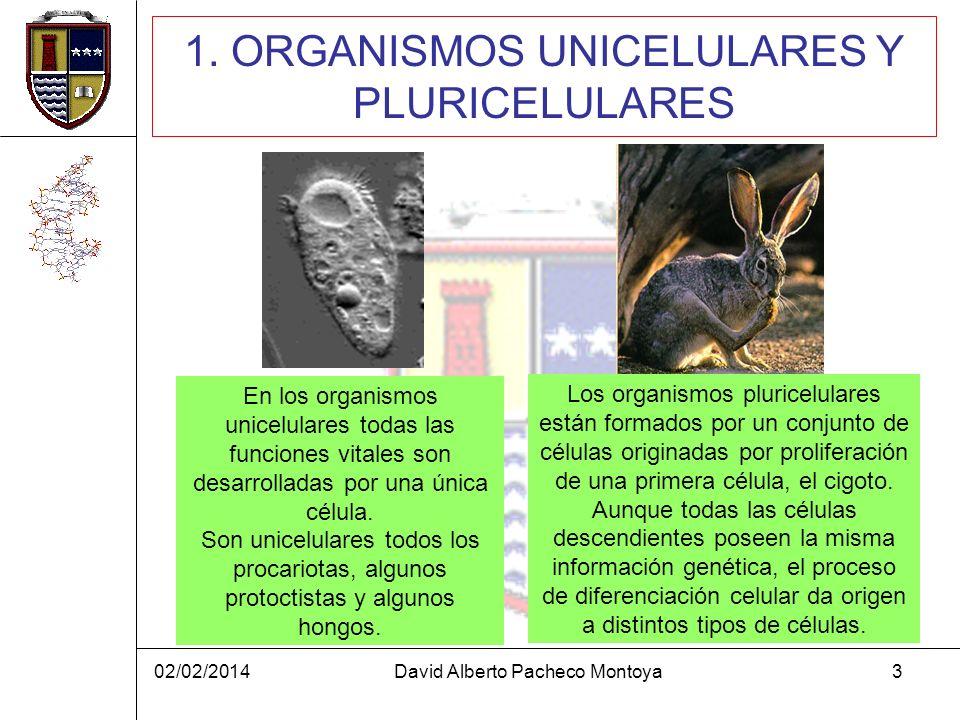 02/02/2014David Alberto Pacheco Montoya3 1. ORGANISMOS UNICELULARES Y PLURICELULARES En los organismos unicelulares todas las funciones vitales son de