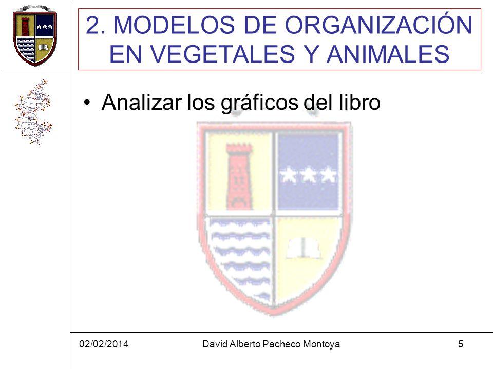 02/02/2014David Alberto Pacheco Montoya5 2. MODELOS DE ORGANIZACIÓN EN VEGETALES Y ANIMALES Analizar los gráficos del libro